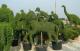 Обеспечиваем приживаемость пересаженых растений