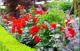 Основные приемы цветочного оформления
