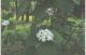 Растения для совместной посадки с крупномерами